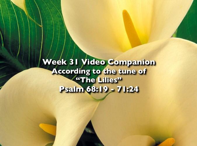 Week 31 Companion 2012