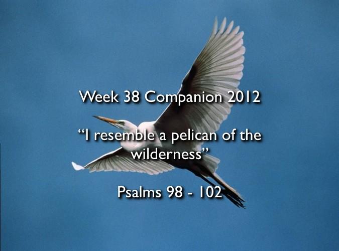 Week 38 Companion 2012