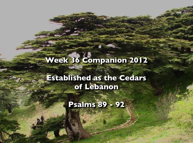 Week 36 Companion 2012